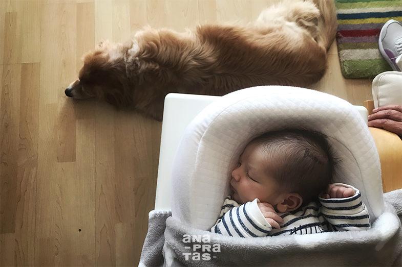 bebe a dormir com ao pé do cão