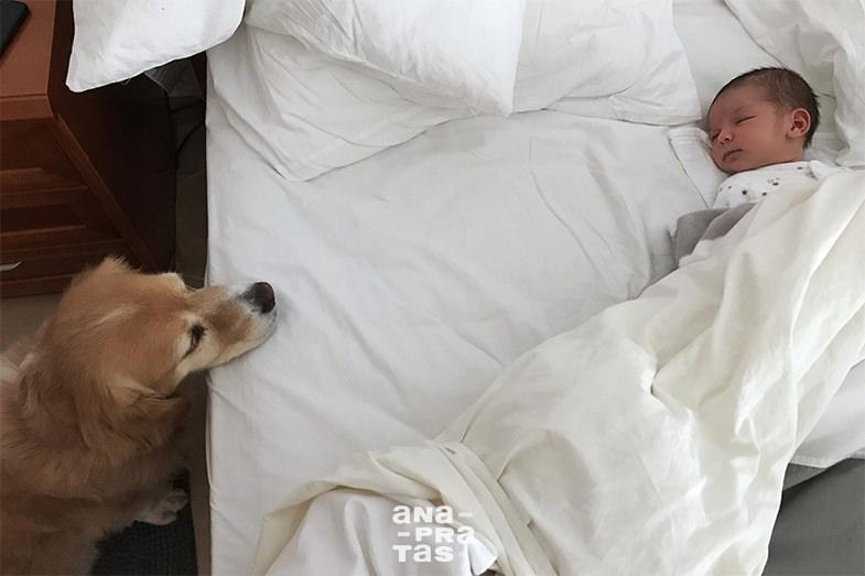 cao a olhar para bebe que dorme na cama