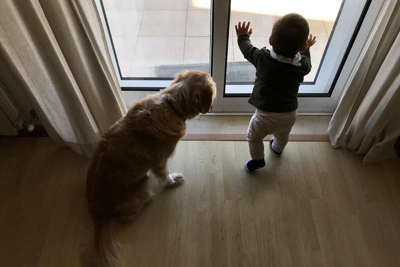 Cão e bebé a olhar pela janela