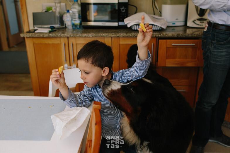 Cão a tentar roubar comida a criança