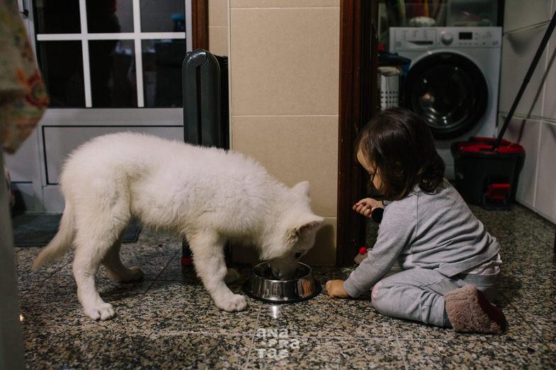 Criança a dar comida ao cão.