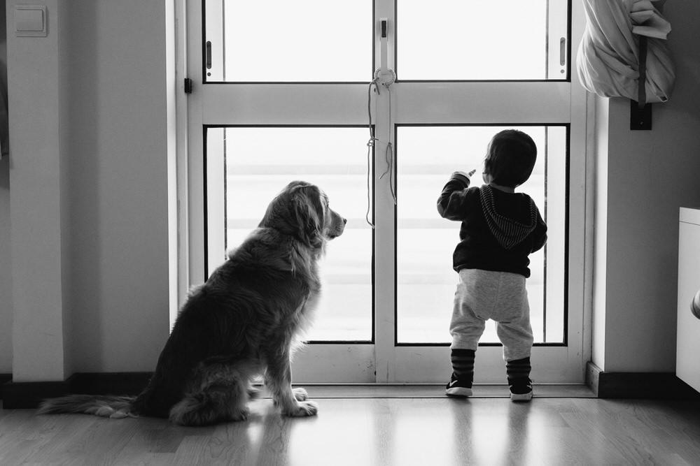 Criança e cão a olharem para rua pela janela