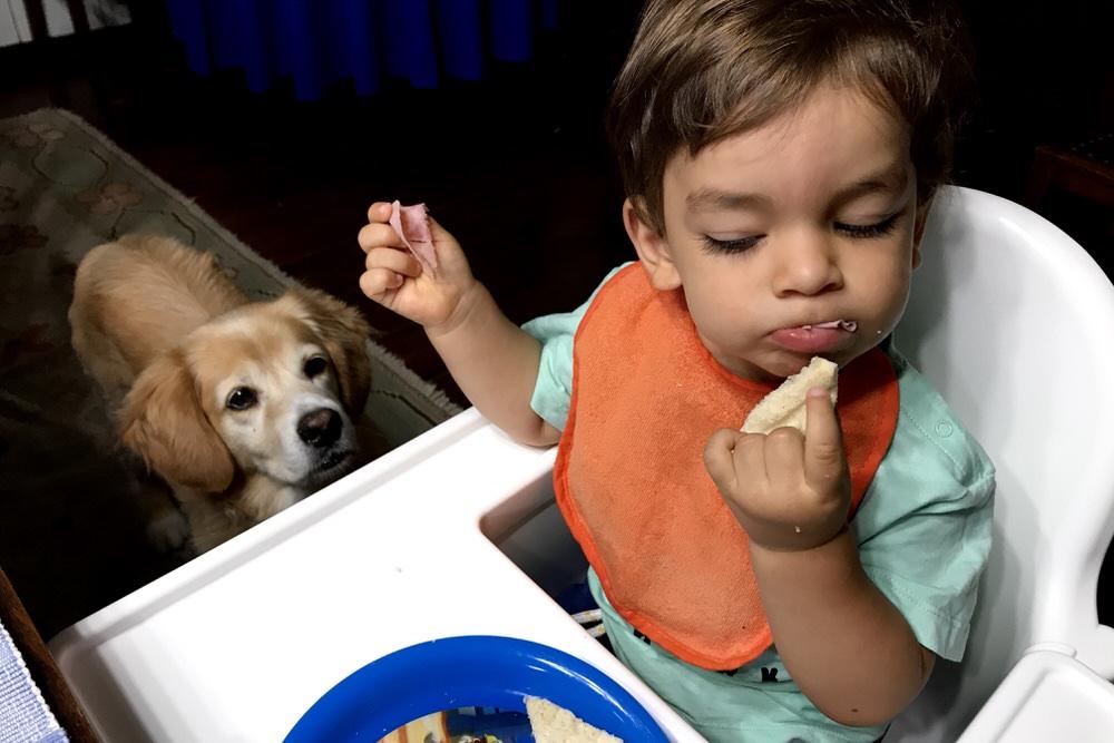 Kid eating while dog stares at him