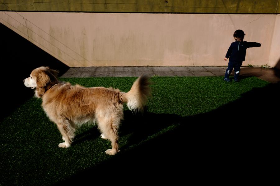 jardim, cão e criança